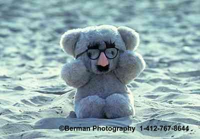 Groucho Teddy Bear at the beach.